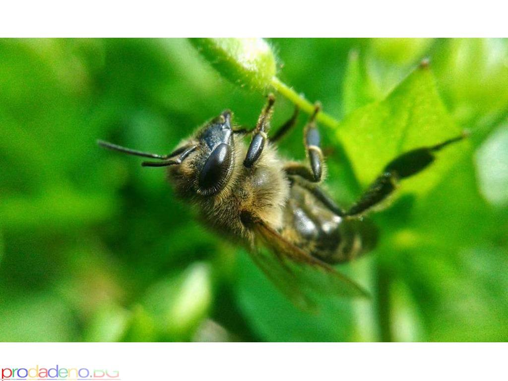 Лещи за камера на мобилен телефон 3 в 1, Fisheye, Wide-angle( широкоъгълна) и Macro( увеличителна) - 2/2