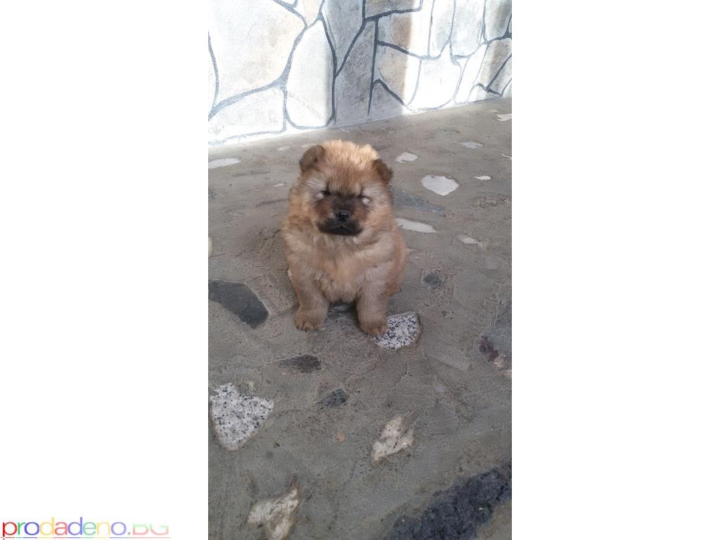 продавам живи плюшени играчки - кученца чау-чау - 1/8
