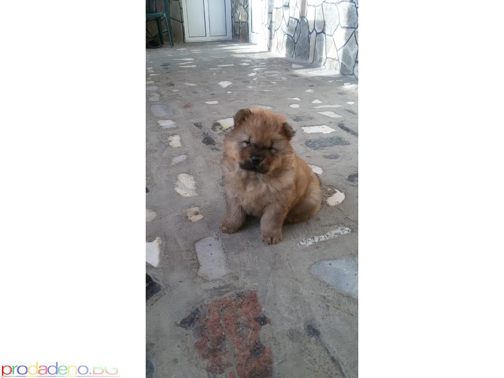 продавам живи плюшени играчки - кученца чау-чау - 2/8