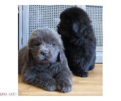 Красиви момичета и момчешки кученца