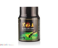 кралска черна мравка