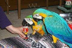 Сладки папагали от Златна мака